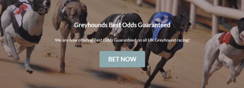 best odds guaranteed greyhounds