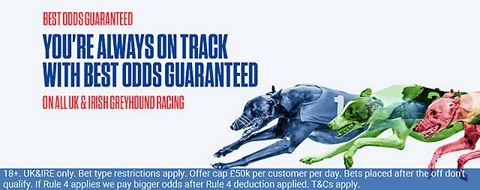 dog racing best odds guaranteed offer