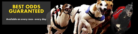 greyhounds bet365 best odds guaranteed